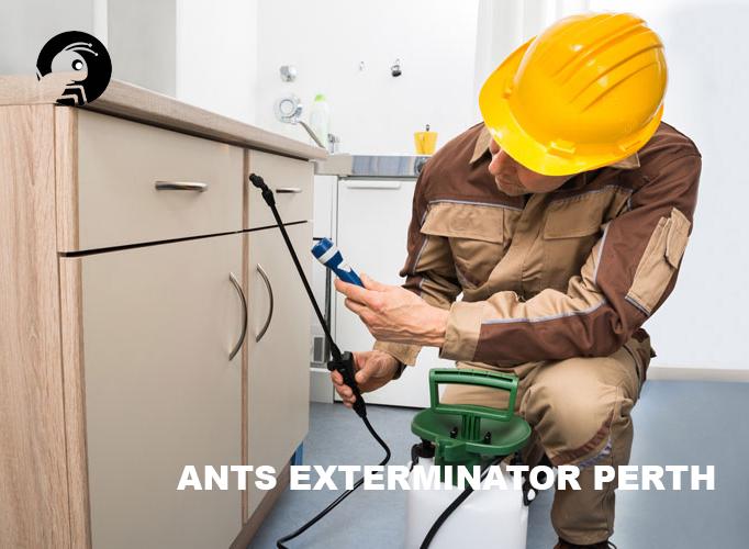 Ants Exterminator Perth WA
